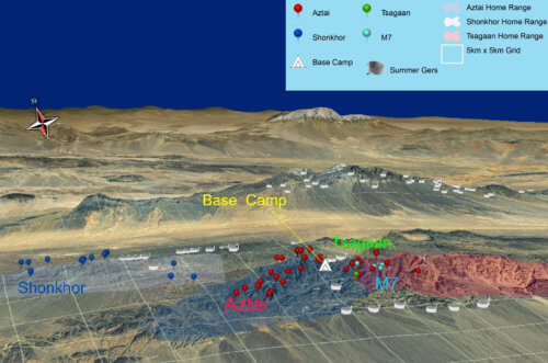 A 3d map of GPS locations for three snow leopards we tracked in Mongolia's South Gobi. Click to enlarge. Photo: Snow Leopard Trust