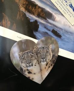 Snow Leopards on the Fridge