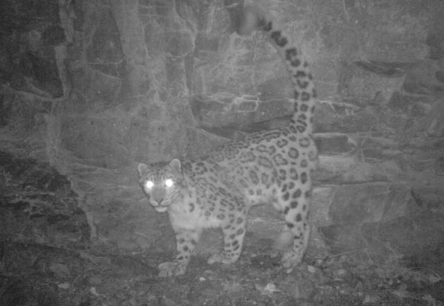 Devekh caught on a research camera