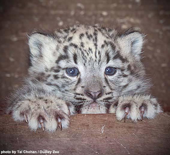 Cubs Near You?!
