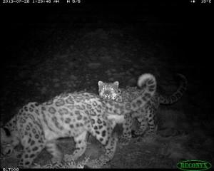 Dagina and her cub