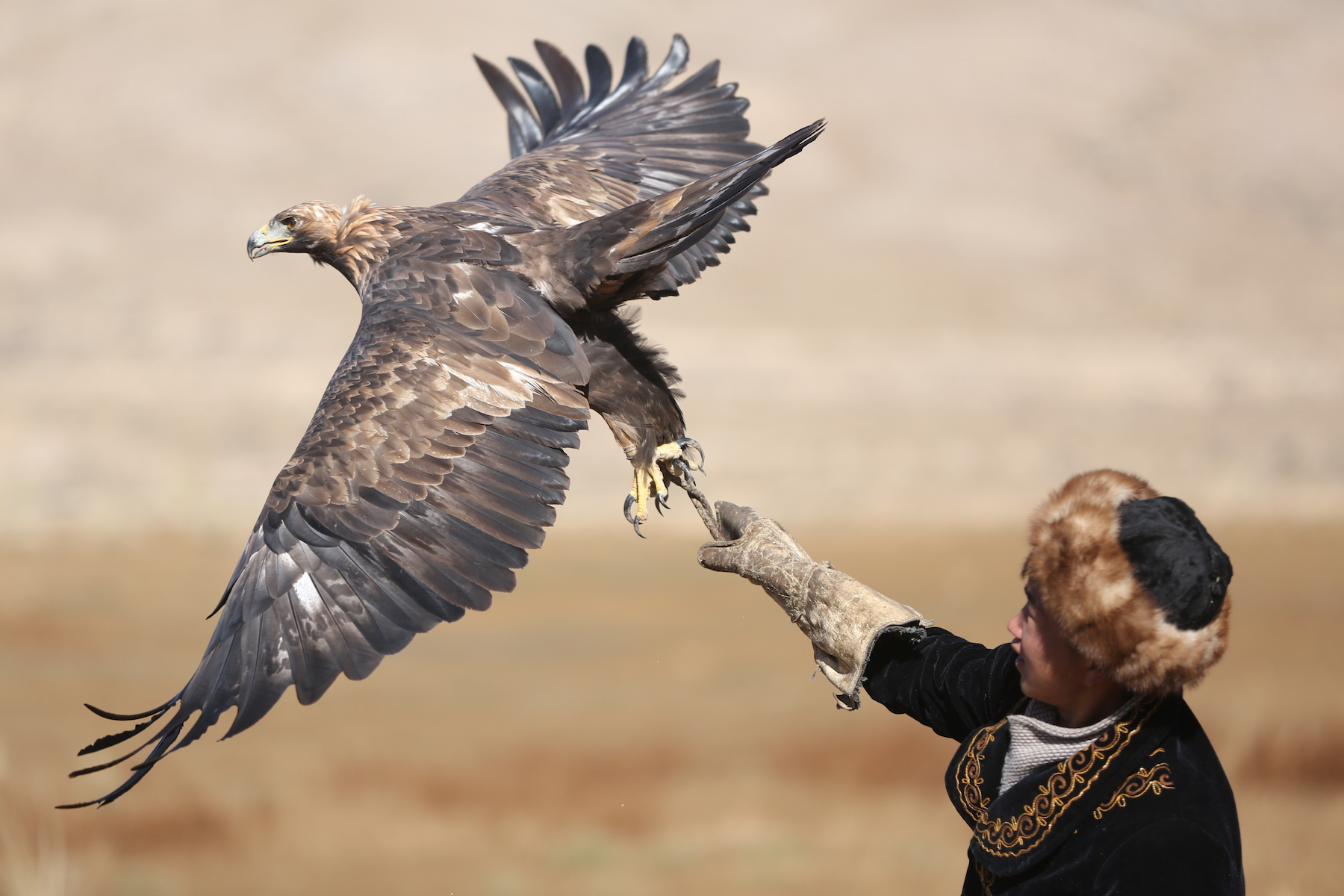 Golden eagles and falcons have been expertly trained for generations in Kyrgyzstan