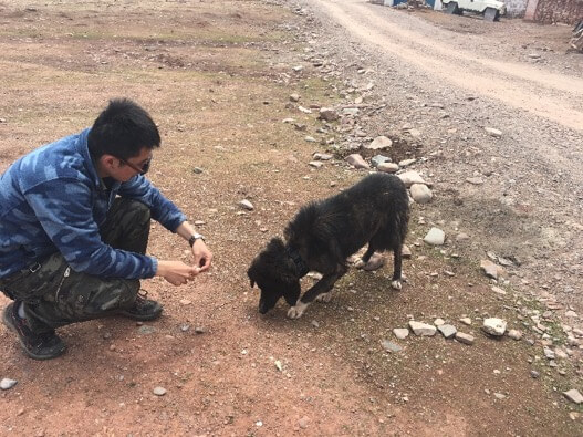 Mingyu is interacting with 'Collar', one of the dogs he's been tracking. Photo: Shan Shui / Panthera / SLT