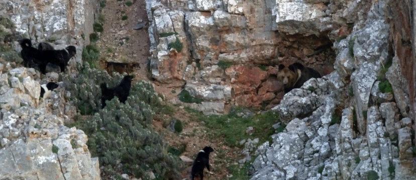 dogs-chasing-bear